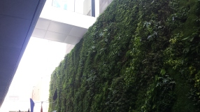 Green wall at the SFMOMA.