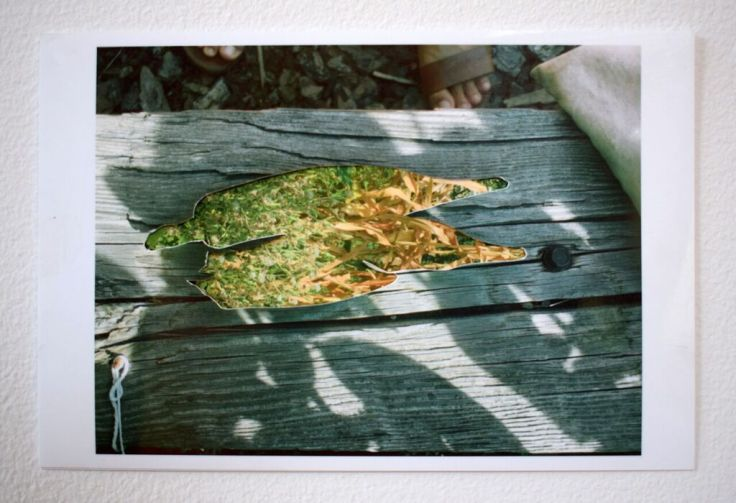 """Stephanie A Lindquist, Okra at 103rd 2018 Photo collage, Edition of 5, 7.5"""" x 10"""" in."""