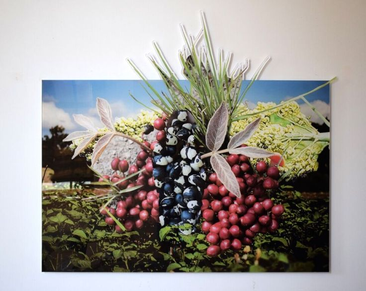 """Stephanie A Lindquist, Cowpea Lannea Edulis Sorghum African Nightshade (East Africa) part of Founded series 2018 Digital print on acrylic 44"""" x 50"""" in."""