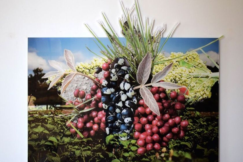 "Stephanie A Lindquist, Cowpea Lannea Edulis Sorghum African Nightshade (East Africa) part of Founded series 2018 Digital print on acrylic 44"" x 50"" in."